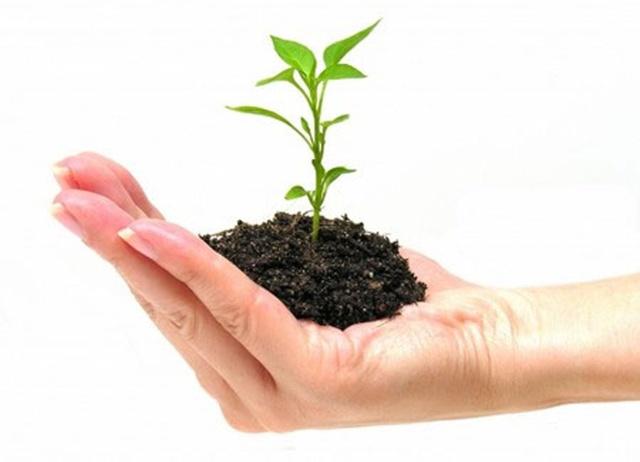 Kinh tế Xanh – Xu thế phát triển kinh tế vì môi trường