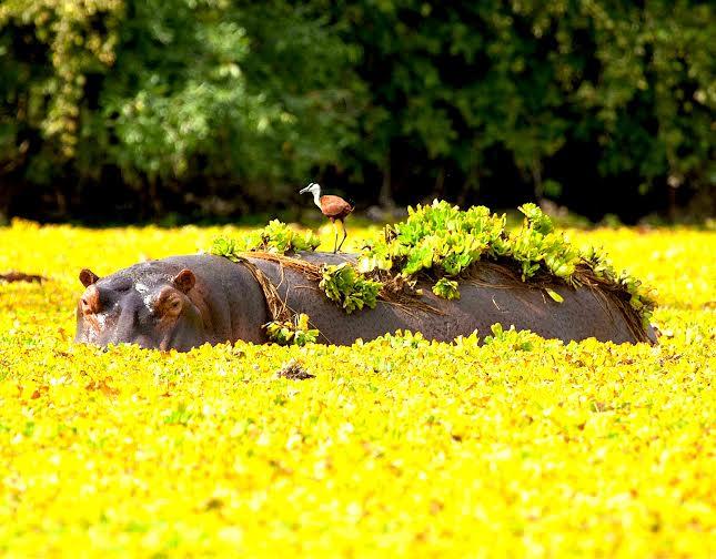 Hoa-minh-voi-thien-nhien-hoang-da-o-Zimbabwe-iVIVU.com-4