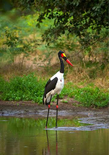 Hoa-minh-voi-thien-nhien-hoang-da-o-Zimbabwe-iVIVU.com-6