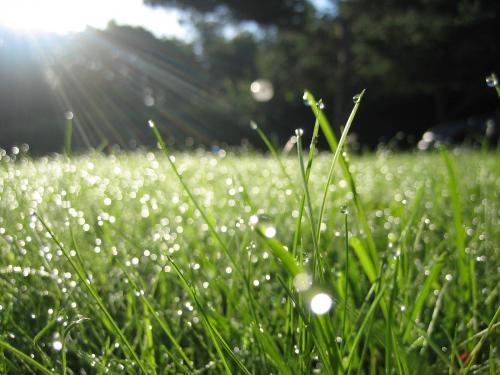 Bạn đã biết về mùi mưa chưa?