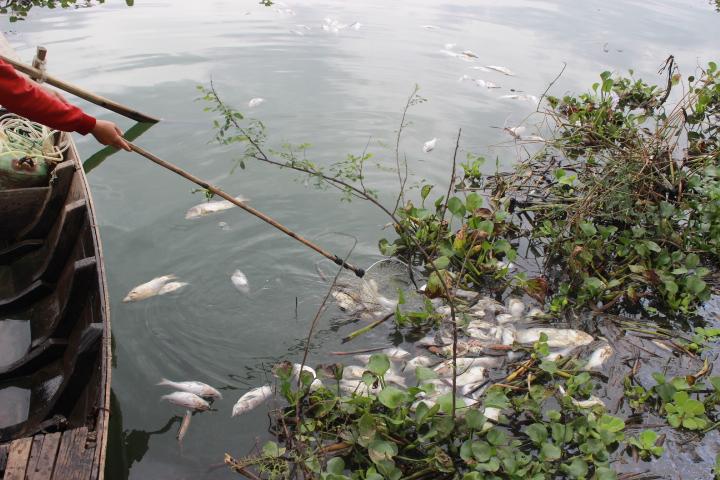 Xử lý vi phạm gây thiệt hại môi trường
