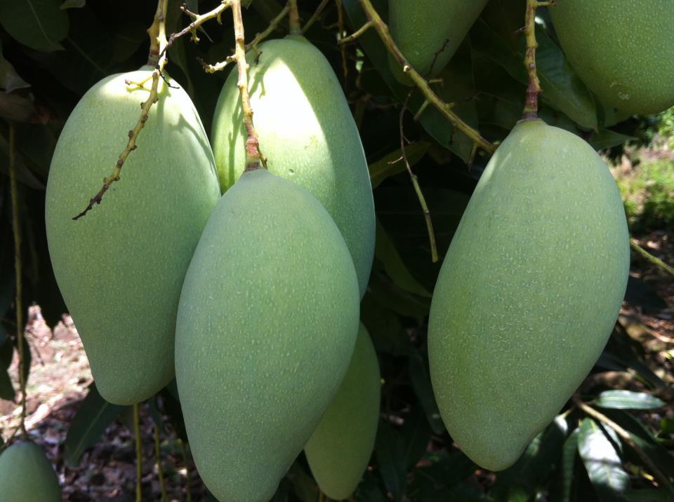 Những loại trái cây giúp bạn tăng cân vùn vụt