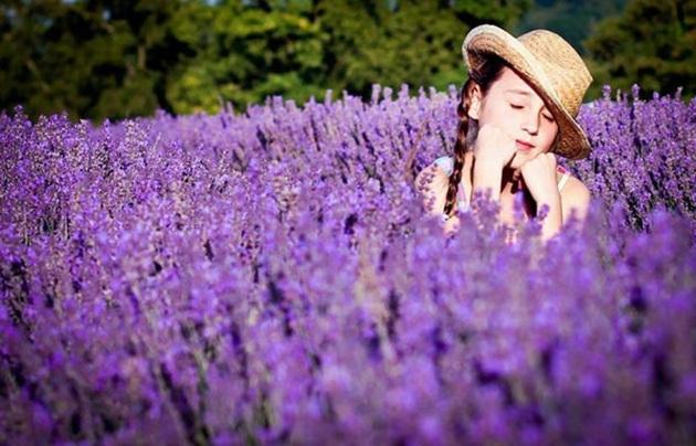 Có nên chọn hoa Oải hương cho ngày Phụ nữ VN?
