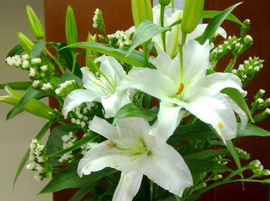 Những loại hoa tuyệt đối nên tặng vợ