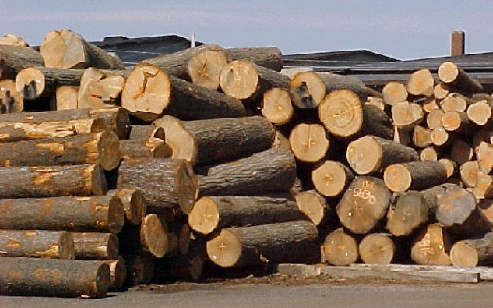 Mỹ, Trung Quốc vượt Lào về gỗ xuất khẩu tới Việt Nam