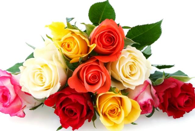 3 nàng hoa đẹp mà bạn nên tặng vợ vào ngày 8/3