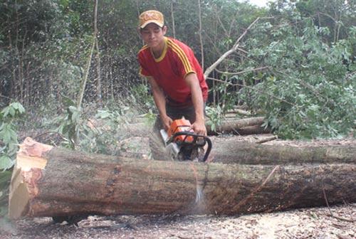 Sự lên giá gỗ cao su vật liệu
