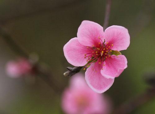 Một số giống hoa hay cắm trong nhà xứ Bắc dịp Tết