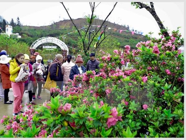 Đặc sắc festival hoa đỗ quyên trên đỉnh Fanxipan