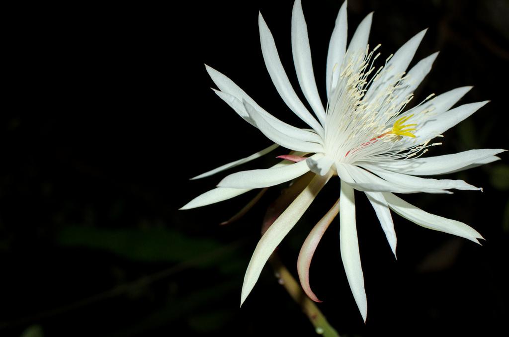 Đắm say với 8 loài hoa đắt giá nhất hành tinh
