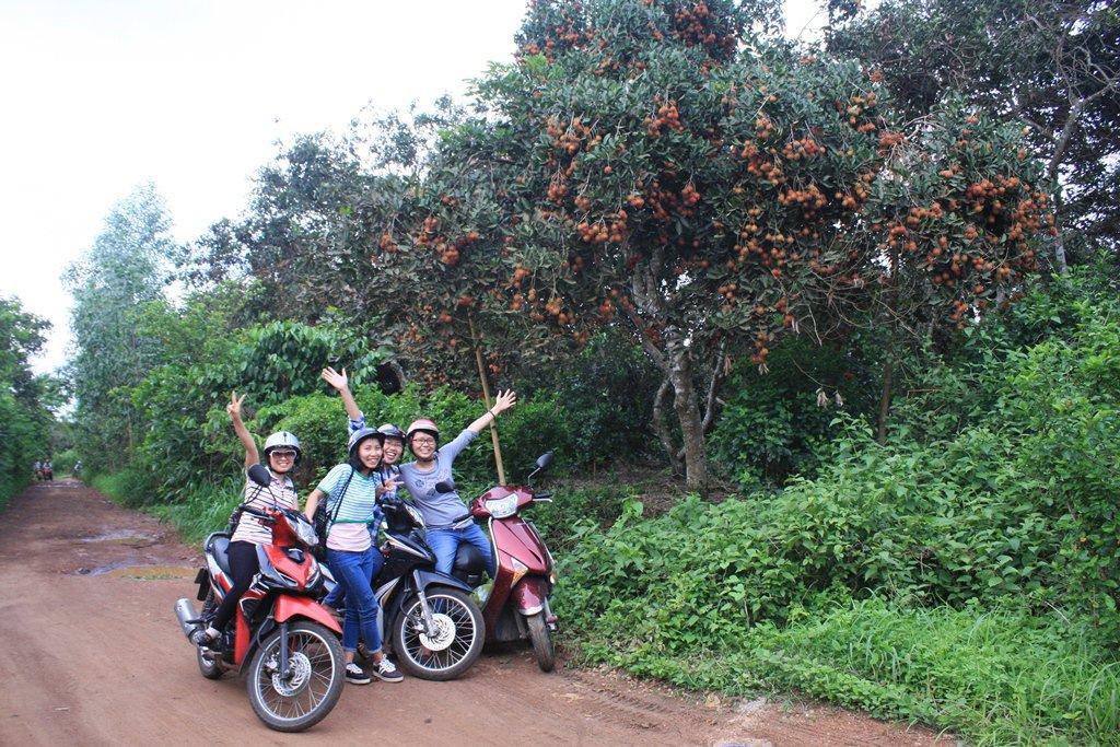 Check-in 10 vườn trái cây gần Sài Gòn quyến rũ có thể đi về trong ngày