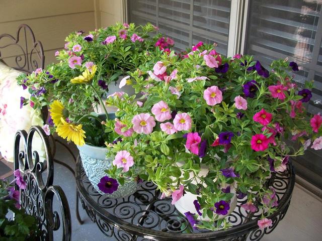 Các loại hoa tuyệt đẹp thích hợp trồng mùa xuân hè