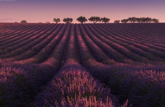 Cánh đồng oải hương ngập tràn sắc tím giữa lòng Provence