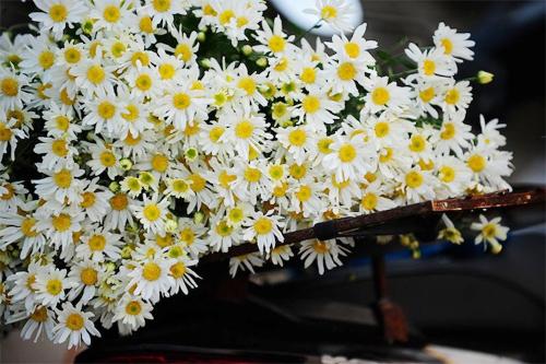 Cách tạo màu cho hoa cúc trắng độc lạ