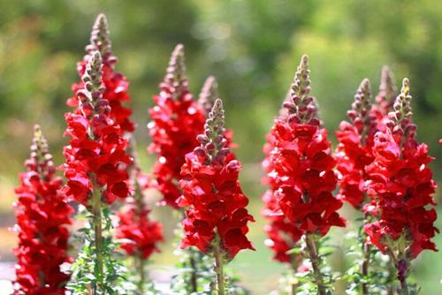 Hình dạng ghê rợn đằng sau những bông hoa sáng chóe