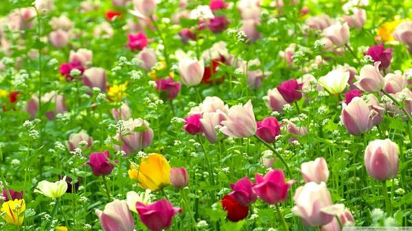Nghệ thuật tặng hoa chúc mừng mà bạn cần biết