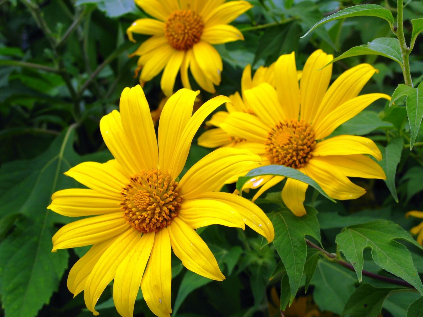 Ý nghĩa ngọt ngào của đóa hoa Dã Qùy trong tình yêu