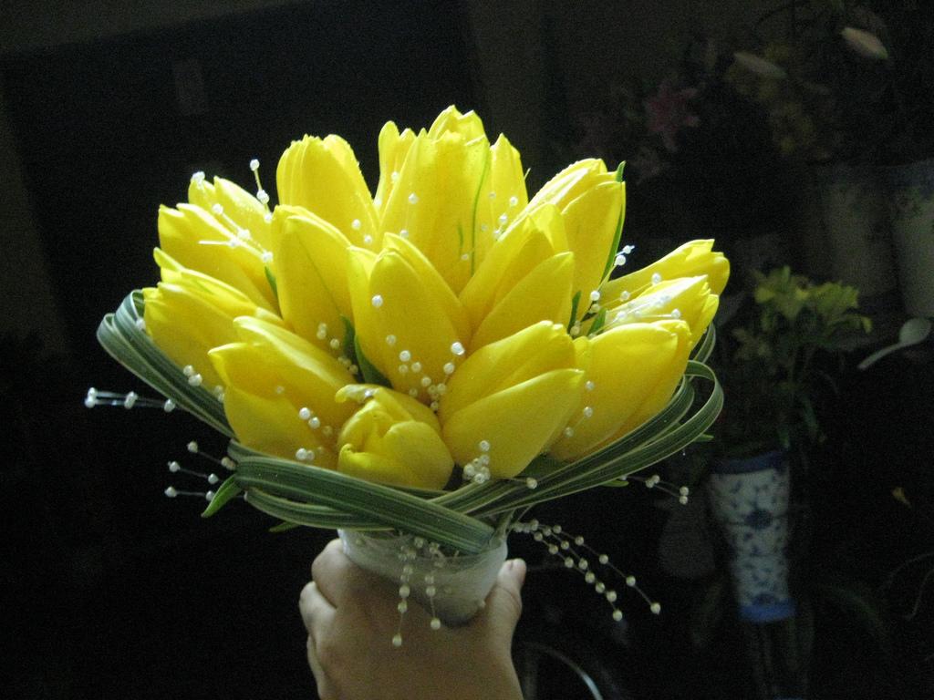 Cảm nhận tình bạn ấm áp với hoa tulip vàng