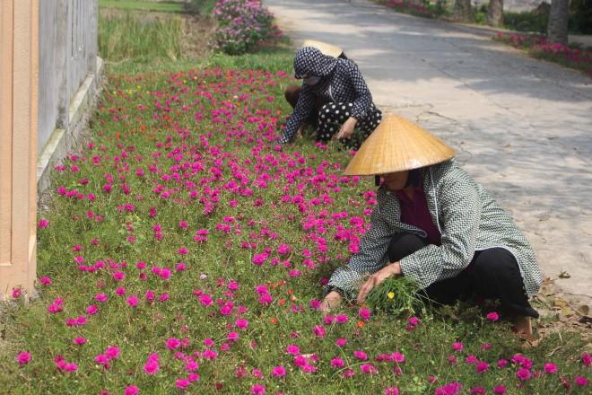 Những góc phố xinh đẹp được 'trồng hoa thay thế cỏ dại' tại Thanh Hóa