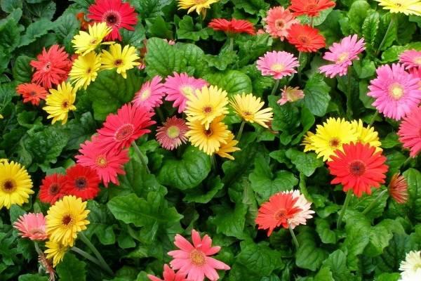 Vài kiểu hoa mang về tài lộc cho gia chủ trong năm mới