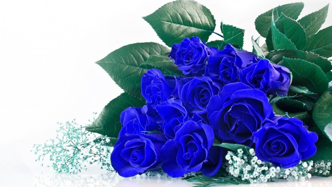 Ý nghĩa sâu sắc hoa hồng xanh – một tình yêu vĩnh hằng