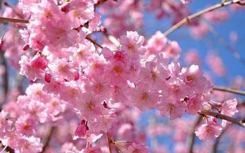 Mười loài hoa đẹp nhất thế giới khiến ai ai cũng muốn ngắm
