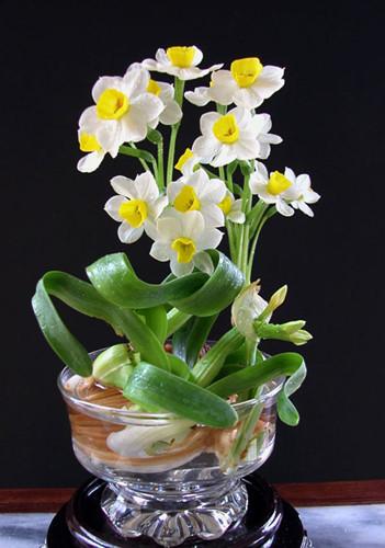 Những loại hoa khá dễ trồng, bạn nên mua ngay để đón Tết