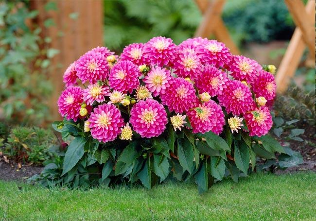 8 loại hoa đẹp tuyệt trồng vào ngày xuân