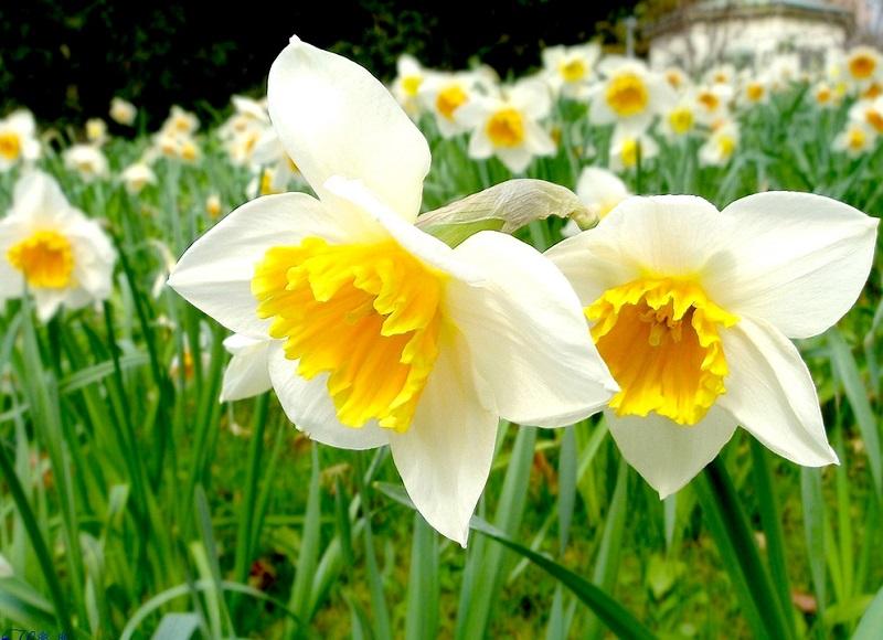 Sáu loài hoa đẹp và ý nghĩa dành cho phòng khách ngày xuân