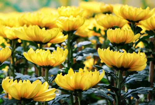 Những loài hoa nên và không nên cắm trên bàn thờ ngày Tết
