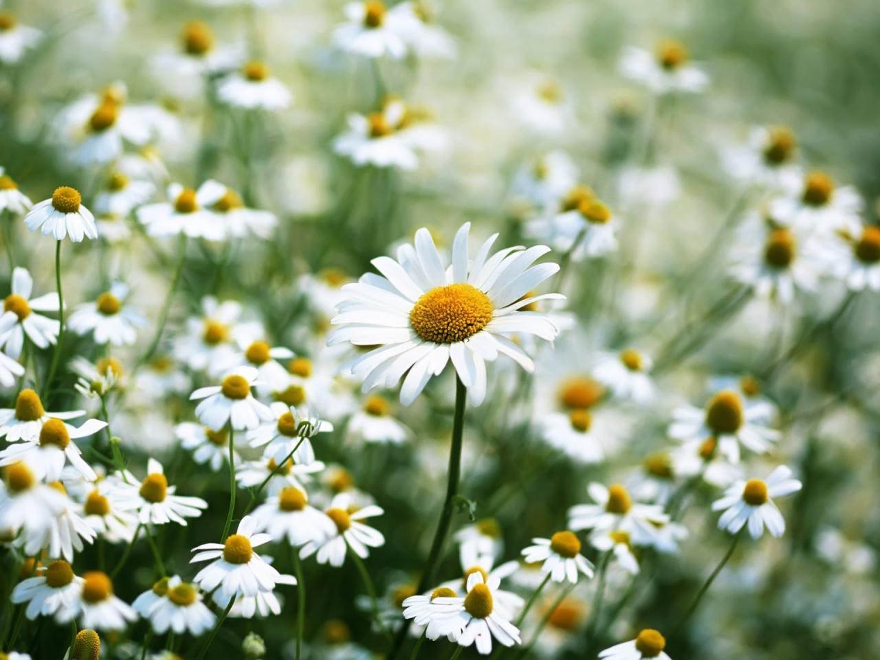 Các mẫu hoa đuổi côn trùng cần trồng trong vườn