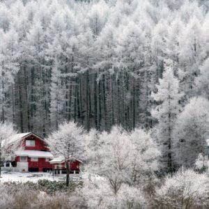 Mùa đông Nhật Bản hóa cổ tích miền tuyết trắng