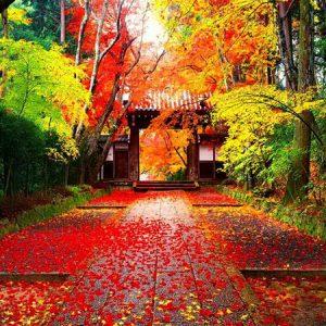 Du lịch Nhật Bản trong thời gian nào là phù hợp nhất?