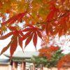 Tất tần tật bí kíp du lịch Nhật Bản mùa thu siêu tiết kiệm