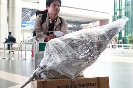 Vận chuyển hoa mai đào Tết bằng đường hàng không hút khách