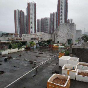 Bất thình lình với vẻ đẹp kiêu kỳ của sân thượng sau khi được cải tạo từ hiện trạng cũ kỹ, hoang vắng