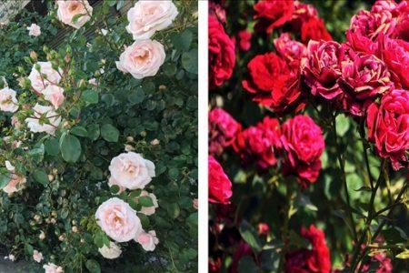 Bố trí nhà đẹp với các loài hoa siêu đẹp và dễ chăm sóc